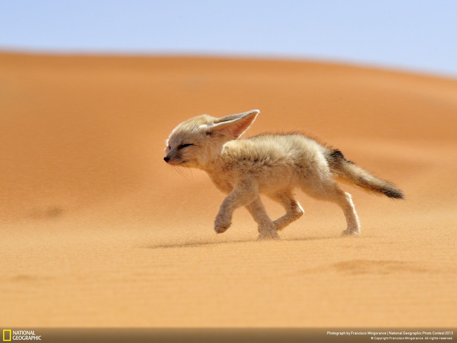National Geographic best photos las mejores fotos del 2013 (1)