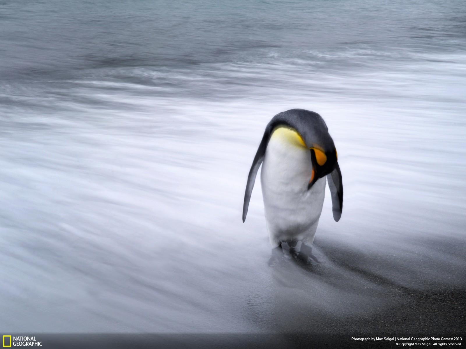 National Geographic best photos las mejores fotos del 2013 (4)