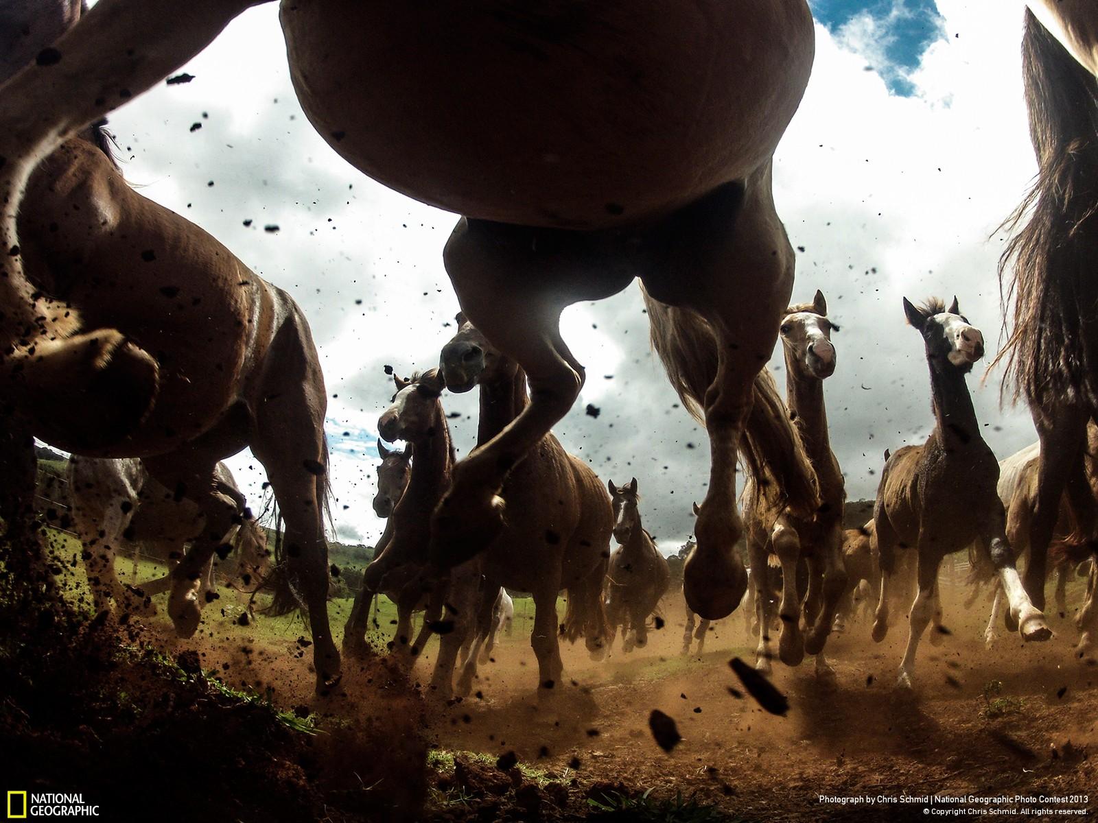 National Geographic best photos las mejores fotos del 2013 (5)