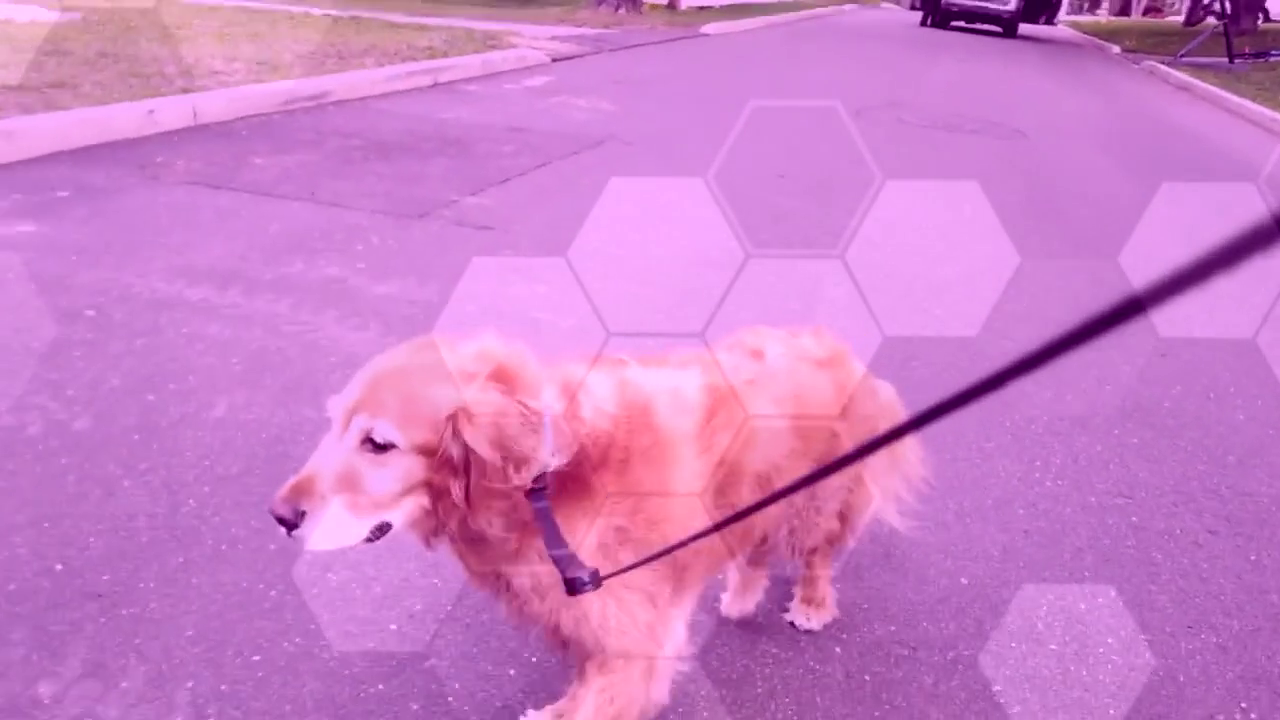 Dog Drone 3 (1)