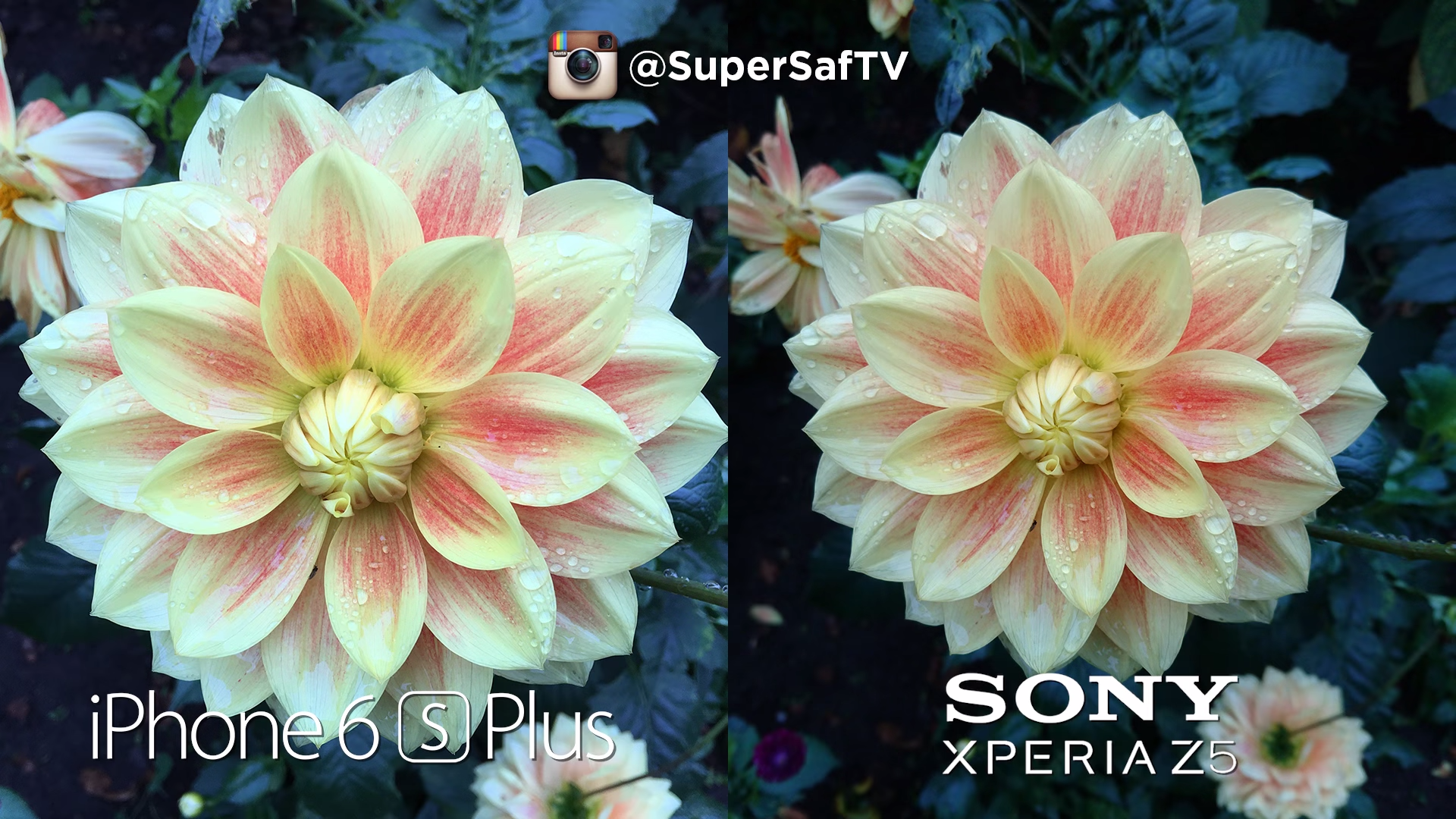 Xperia z5 vs iPhone 6s plus (2)