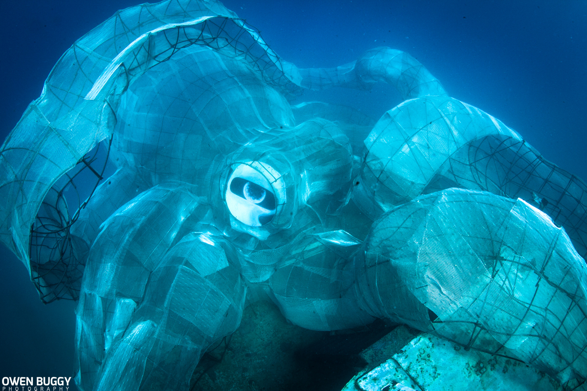 arrecife pulpo 04