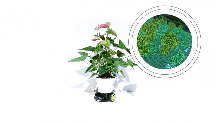 PlantRobot