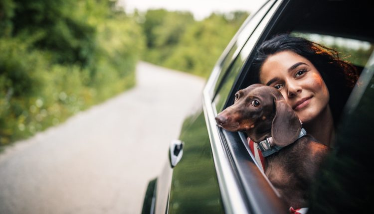 Woman and dachshund driving in a car