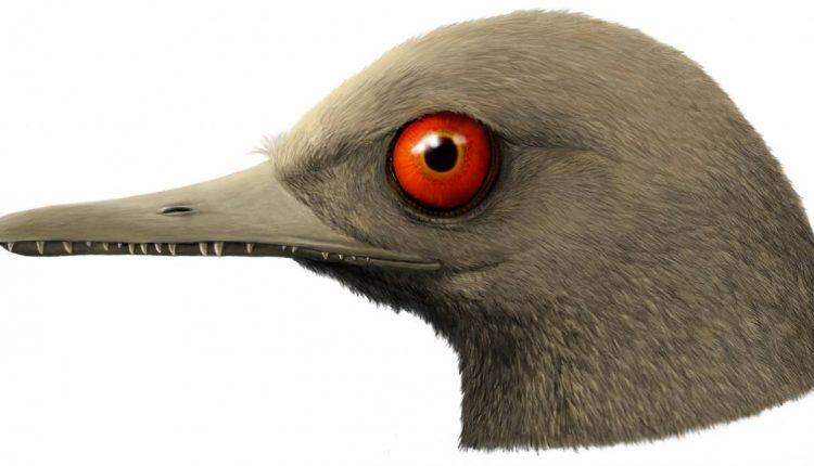 Nueva-especie-de-dinosaurio-diminuto (1)