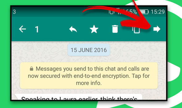 WhatsApp-How-To-Send-Bold-in-WhatsApp-Embedded-Replies-Forward-Video-To-Friend-Send-Video-To-Another-Chat-Forward-Image-File-in-570860
