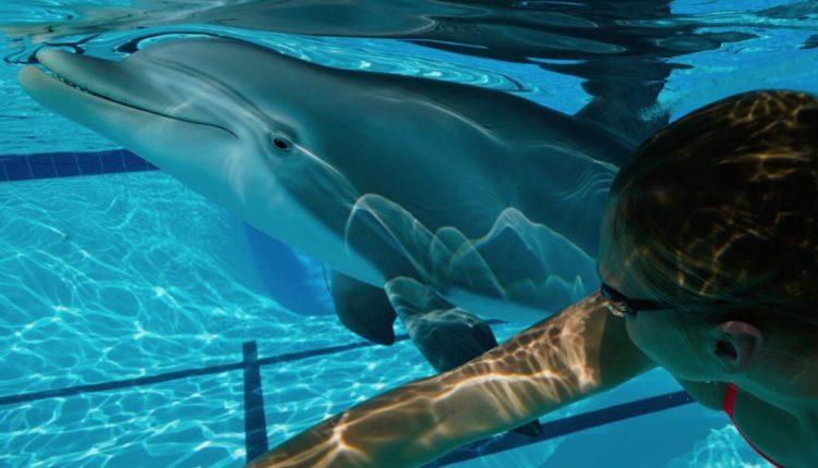 delfin-robotico